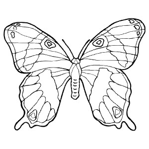 BUTTRFLY - Colouring Page